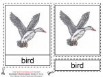 Montessori Materials - Parts of a Duck Age 6 to 9