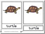 Montessori Materials – Turtle Nomenclatures Age 3 to 6