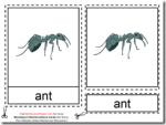 Montessori Ant Nomenclatures Age 3 to 6