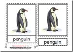 Montessori Materials, Parts of the Penguin, Age 3 to 6
