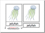 Montessori PDF Materials, Parts of the Jellyfish, Age 3 to 6