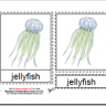 Montessori PDF Materials, Parts of the Jellyfish, Age 3 to 6