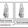 Montessori PDF Materials, Parts of the Human Foot, Age 3 to 6
