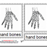 Montessori PDF Materials, Parts of the Human Hand, Age 3 to 6