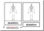 Montessori Human Skeleton Materials, Age 3 to 6